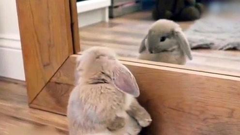 """当一只兔子看到""""另一个自己"""" 这模样太可爱了"""