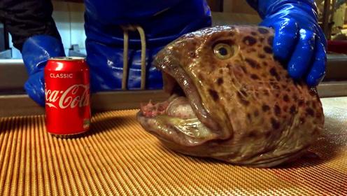 太强悍!鲶鱼只剩下一个头,却能轻松咬碎可乐罐!
