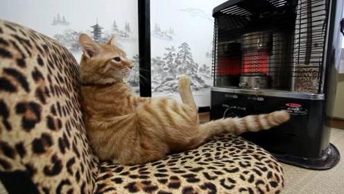 第一次见到这么会享受的猫咪,悠闲的烤火,就差来人给它捶背了