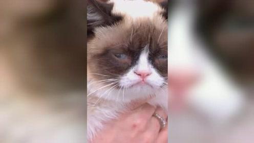 """天啊!天生臭脸的网红""""不爽猫""""去世 曾狂揽1亿"""