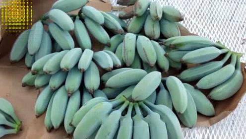 谁说香蕉是黄色的?吃过这些品种的绝对是土豪
