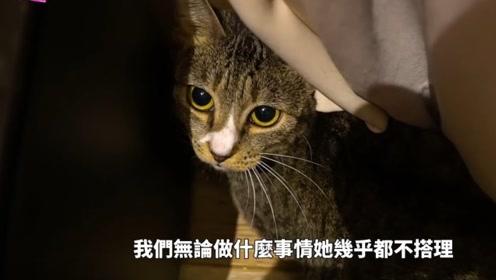 《幸福满屋》神奇猫咪去哪了?刚领养的猫咪究竟如何与它互动!