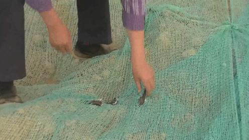 残忍!工地为防尘用巨网将上千燕巢挡住致大量燕子死亡引发争议!