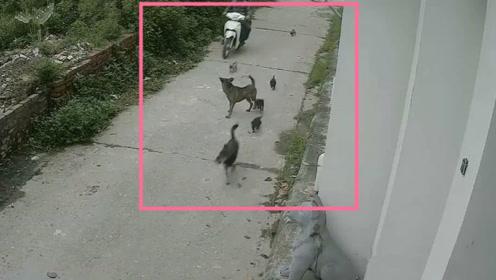 狗妈妈带着狗宝宝外出玩耍,结果阴阳两隔,真相令人发指