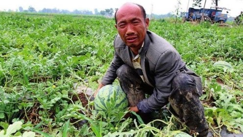 今年瓜农种的西瓜又滞销了,为啥在城里还是买不到便宜的西瓜