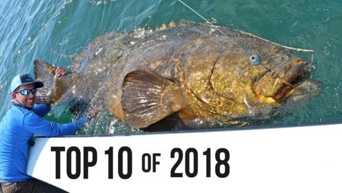 上年度十大最佳捕鱼时刻,精彩瞬间,激动人心