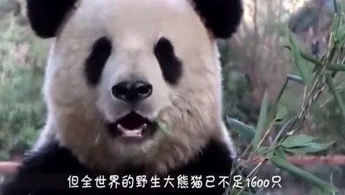 国宝实红!那些没有熊猫的国家为吸引游客,竟对鳄鱼下手了