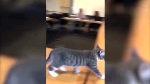 小奶猫大闹课堂,连老师都无心讲课,想要撸一把啊