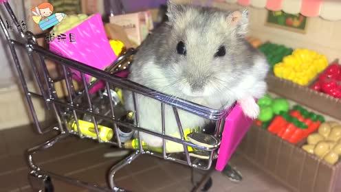 小仓鼠躺在购物车里,看着美食,吃着瓜子!