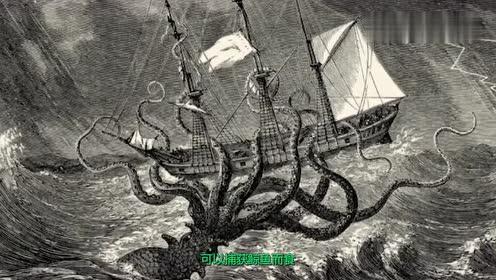 地球最大鱿鱼,体长超20米只怕抹香鲸,连科学家也没见过活的