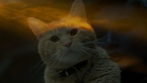 橘猫噬元兽居然是这样来的,年轻的弗瑞局长有点懵啊