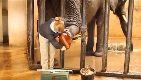 世界上最奇葩的职业,专给大象修脚年薪百万,你会干吗?