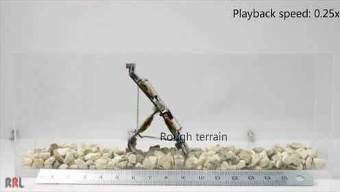 蚂蚁机器人超强弹跳力