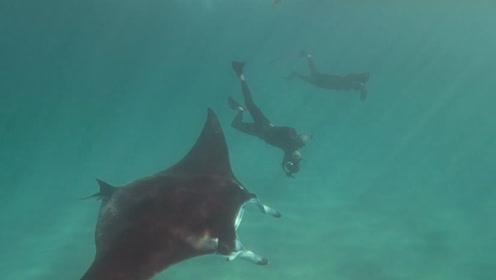 最美画面!魔鬼鱼眼睛被鱼钩挂住向潜水员求助