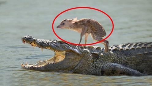 7个动物拯救动物的感人瞬间!猛兽之间也有真爱!