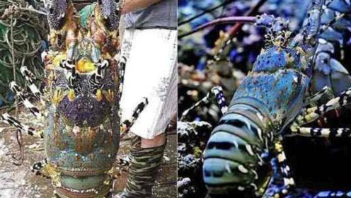 这是一种非常珍贵的海鲜,属于王者级别,渔民们很是尊敬!