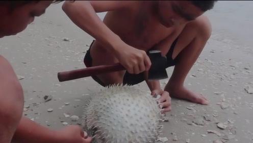 小哥为了吃河豚,对着死去的河豚一斧头下去,意外的事情发生了