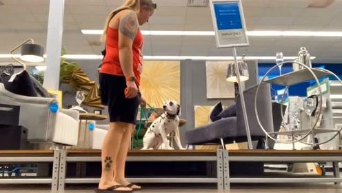 斑点狗也不错 训练起来也是超级简单