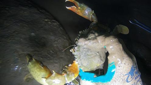 好久没来这里赶海了,石头下面螃蟹依然的多,几个小时收获满满
