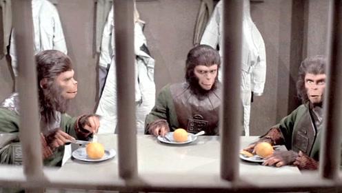 未来世界没有猫狗,人类大规模饲养人猿当宠物,却不知闯了大祸!