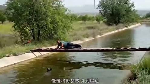 野猪意外落水,老外冒生命危险救猪,野猪获救后一举动令人侧目