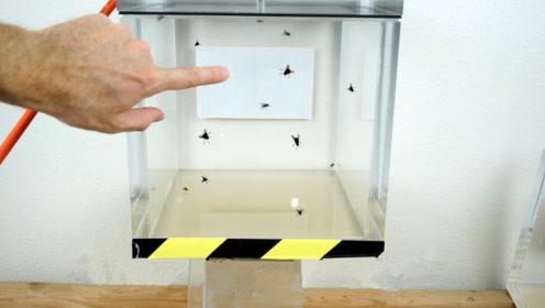 苍蝇的生命力有多强?老外把苍蝇冷冻又放真空箱,结果出人意料!