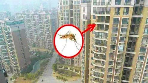 蚊子最高可以飞几层楼高?专家给出答案,买房别选错楼层了!