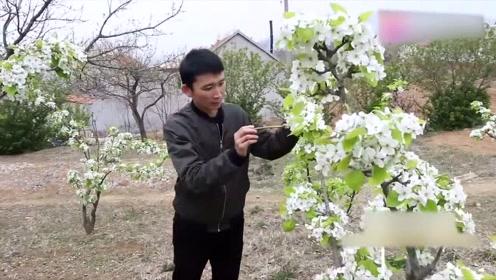 又到了开花的季节,我们来到桃花园,一起去看看怎样给花授粉