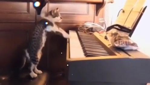 作为一只猫,如果不会点才艺,根本混不下去