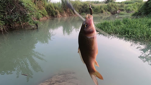 钓鱼就是选这样的地方,虽然收获不多,但是很过瘾