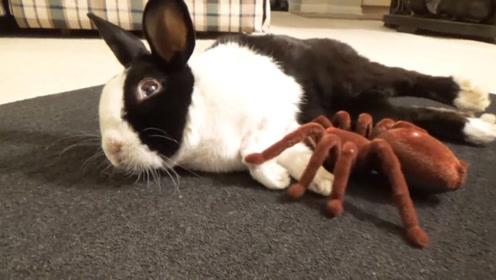 小兔子正在家中睡觉,突然嗅到一股危险的味道,网友:吓到了