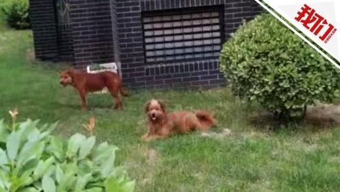 西安一小区5天内两姐妹均被狗袭击 物业:无法鉴定是不是野狗