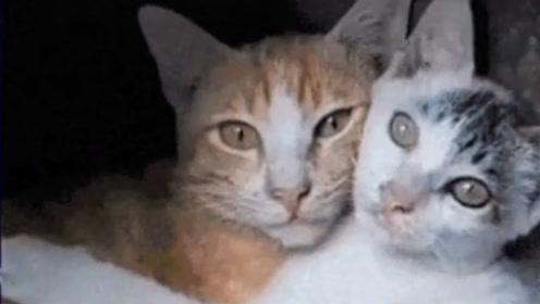 猫咪一旦霸道起来场面就会难以控制