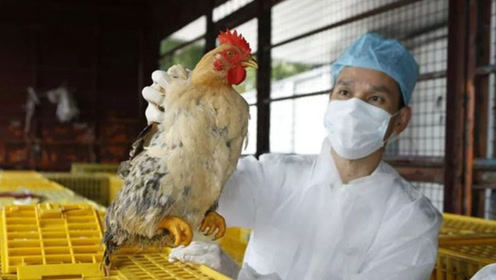 北京确诊人感染H5N6禽流感病例,曾接触禽类,尚不能有效人传人