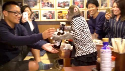 日本餐厅雇猴子当服务员,客人点一盘毛豆,拿过去却只剩一个盘!