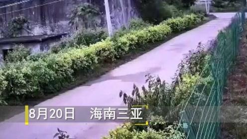 昨晚,三亚地震了!摄像头记录下惊险一幕