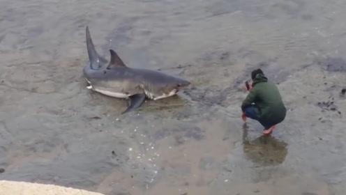海边发现一条搁浅的鲨鱼,拍照还挺配合!有趣!