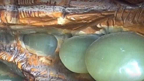 小伙深山挖到玉蘑菇 像玉一样晶莹剔透 爷爷看到后傻眼了