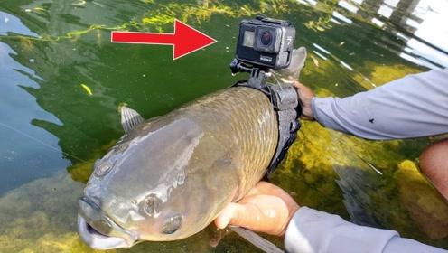 鱼当摄影师能拍到什么?老外钓一条大鱼亲测,进入另外一个世界!