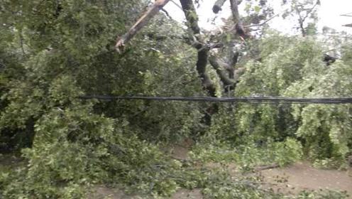 台风白鹿过境,百年老榕树骤然倒塌,福建漳浦3600多用户断电