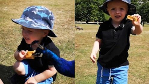 孔雀从3岁男童嘴边抢走食物 遭男童追回