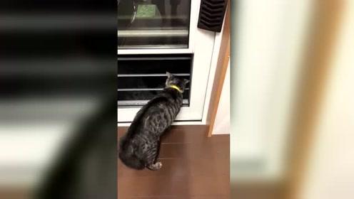 为了赶走小野猫,真是辛苦我们当家的猫咪主子了