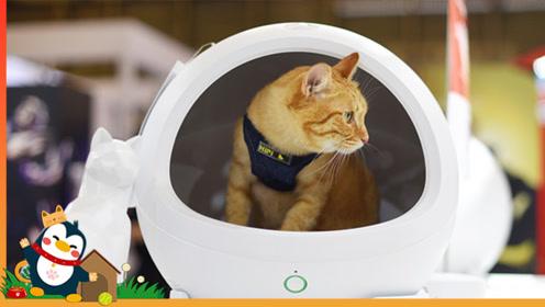 """亚宠展宠物用品黑科技,只能""""厕所""""悬浮猫草,主子会喜欢吗?"""