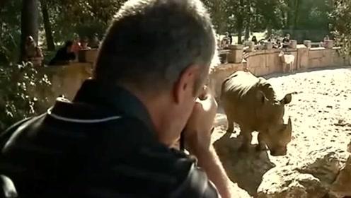 犀牛背上遭刻自己名字 动物园游客行为引起众怒