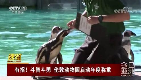 有招!斗智斗勇 伦敦动物园启动年度称重