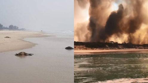 惨剧!澳大利亚小岛突发山火 40只袋鼠逃至海滩溺水惨死