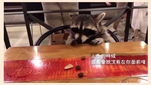 去釜山游玩,打卡这间咖啡厅好多浣熊,简直被萌翻了