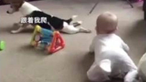 萌娃和狗狗在地毯上玩耍,网友:狗狗为什么也爬行?有点懵逼