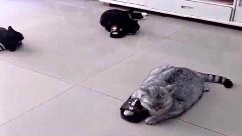 一猫一鞋,不争不抢,瞄:咸鱼的味道真香!