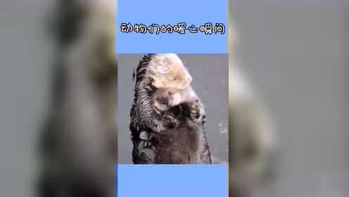 动物们的暖心瞬间